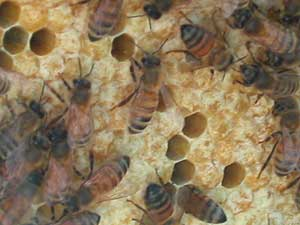 colony 2 bee bread
