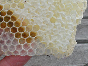 honeycomb in hand