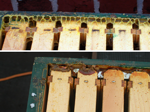 beeswax versus propolis with Italians versus Carniolans