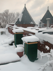 2006 hives in the snow