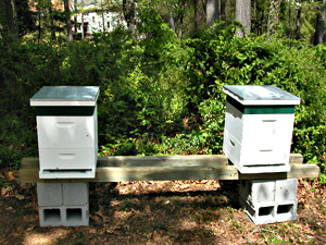 new hives at monastery