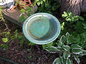 bees wings make ripple in birdbath
