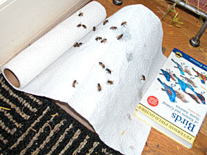 wet cold bees on towel