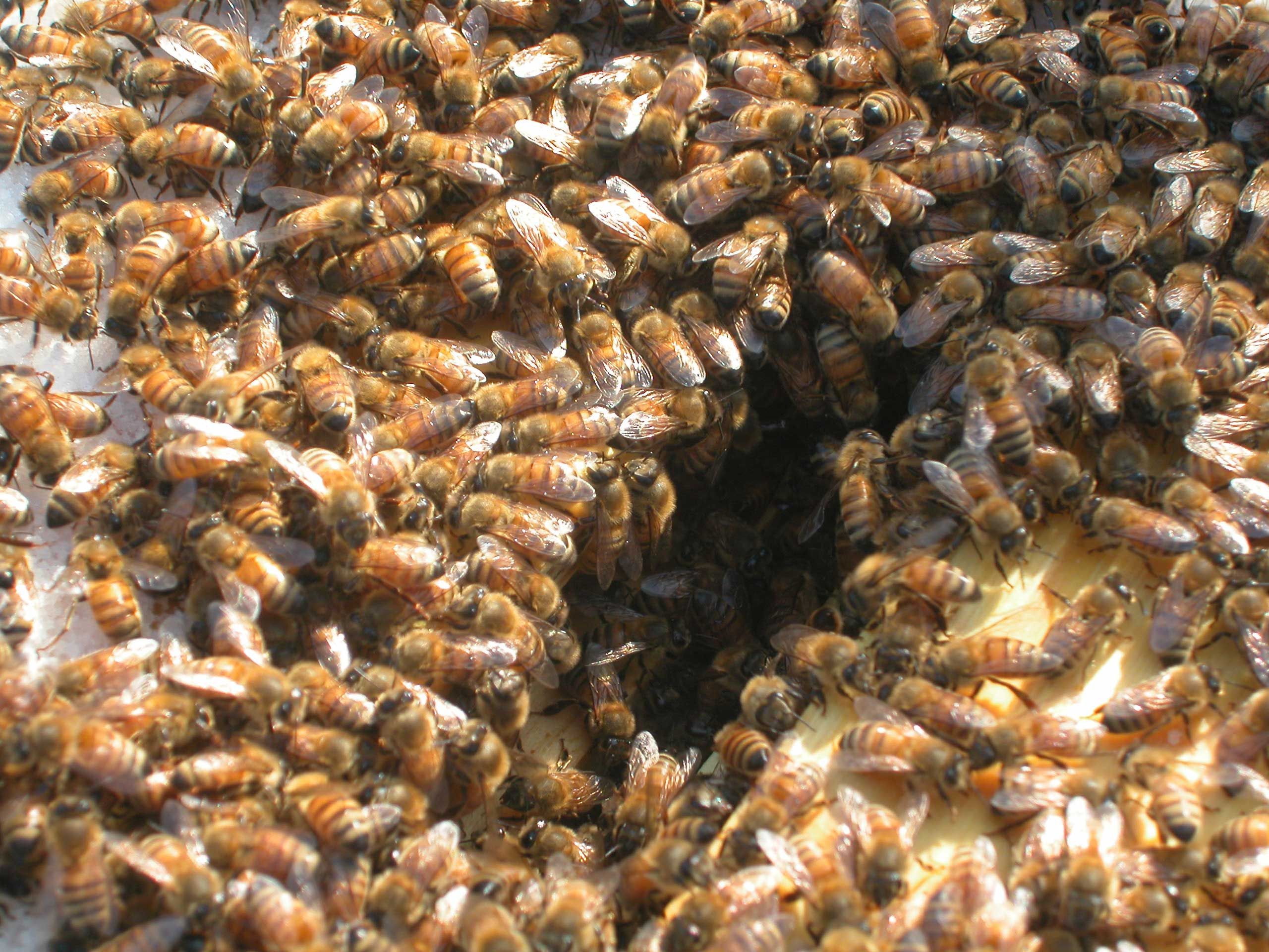 bees eating sugar at the monastery