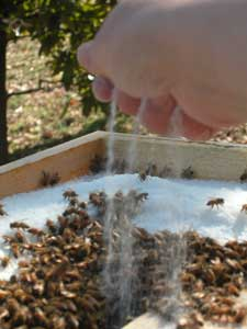 sprinkling sugar to clear bees away