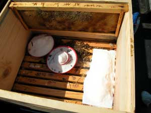 sugar and honey given to Twain hive
