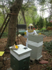 jane's apiary
