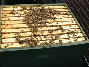bees in top box in December!