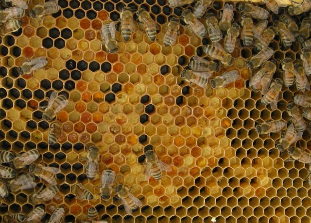 fresh pollen stores