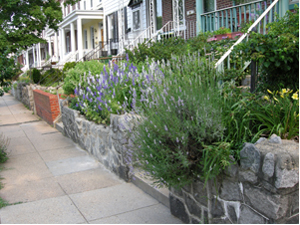 street planted with lavender and salvia
