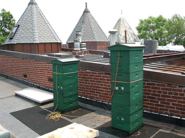 roof hives in mid-June 2008