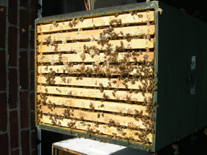 top of brood box 3