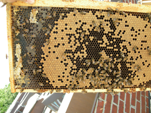 closeup of brood frame from box 4