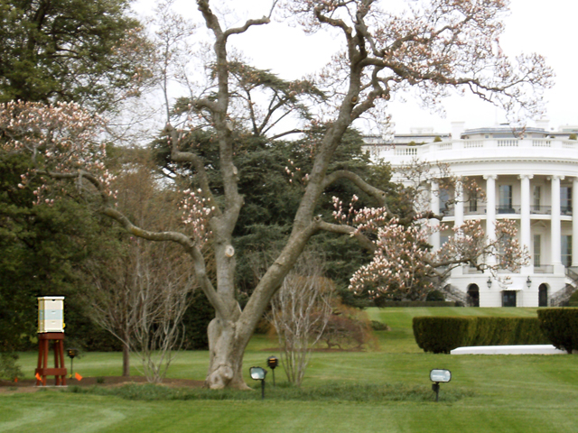 larger landscape view of white house bees